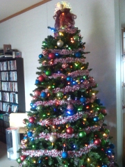 It's beginning to look a lot like Christmas ...