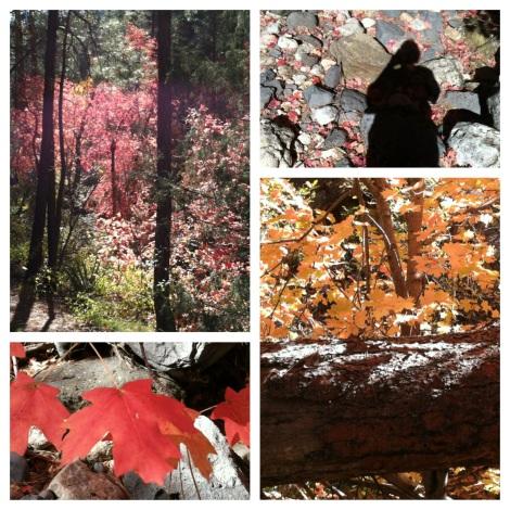 Maple grove in Oak Creek Canyon