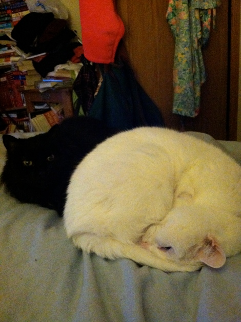 Enjoy this gratuitous picture of my cats, in a rare moment of togetherness.