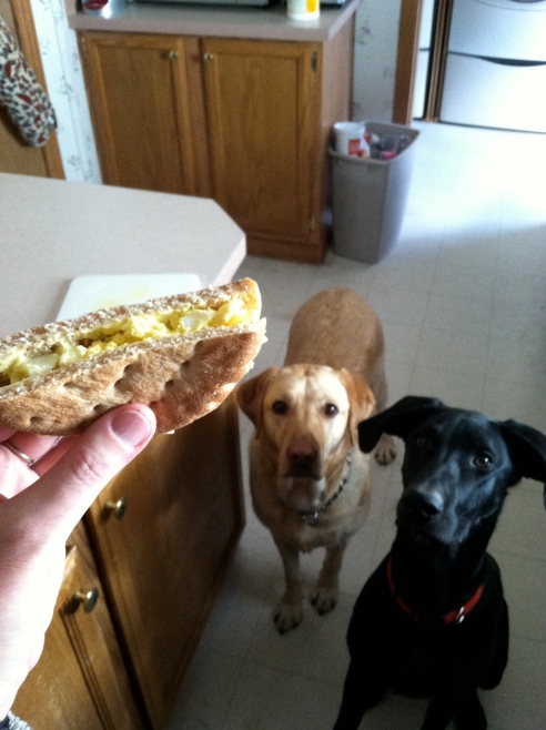 Someone was awfully interested in my sandwich. Don't worry. I gave them a Pupperoni after I snapped the picture.